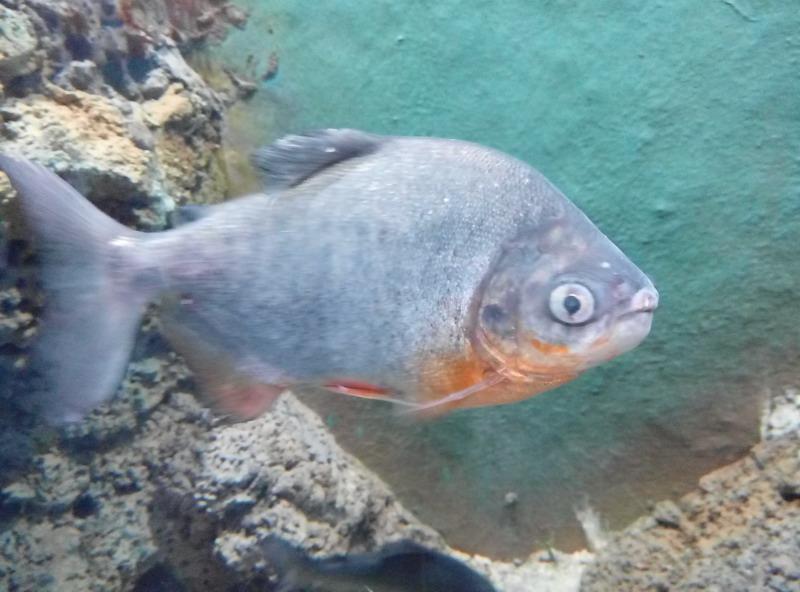 海洋公园4:年年有鱼|摄友沙龙