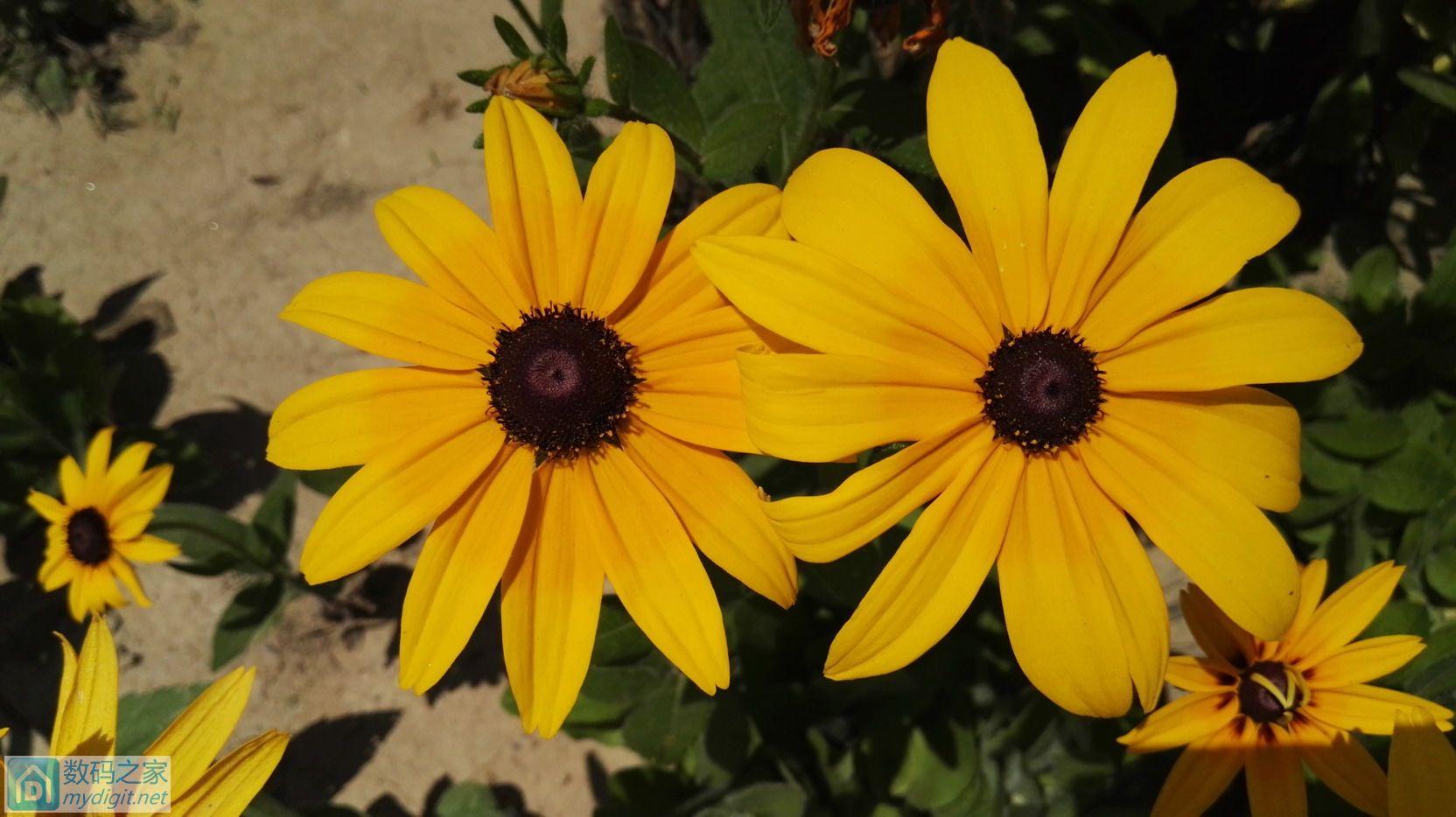全天32公里,又照了一些花,请欣赏。