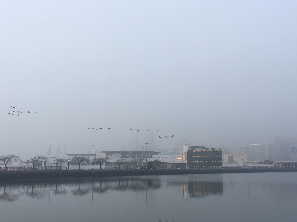 群鸟飞,早起上班去了