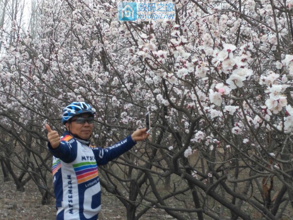 骑行看杏花