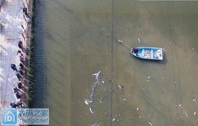 航拍捕鱼掉下去了
