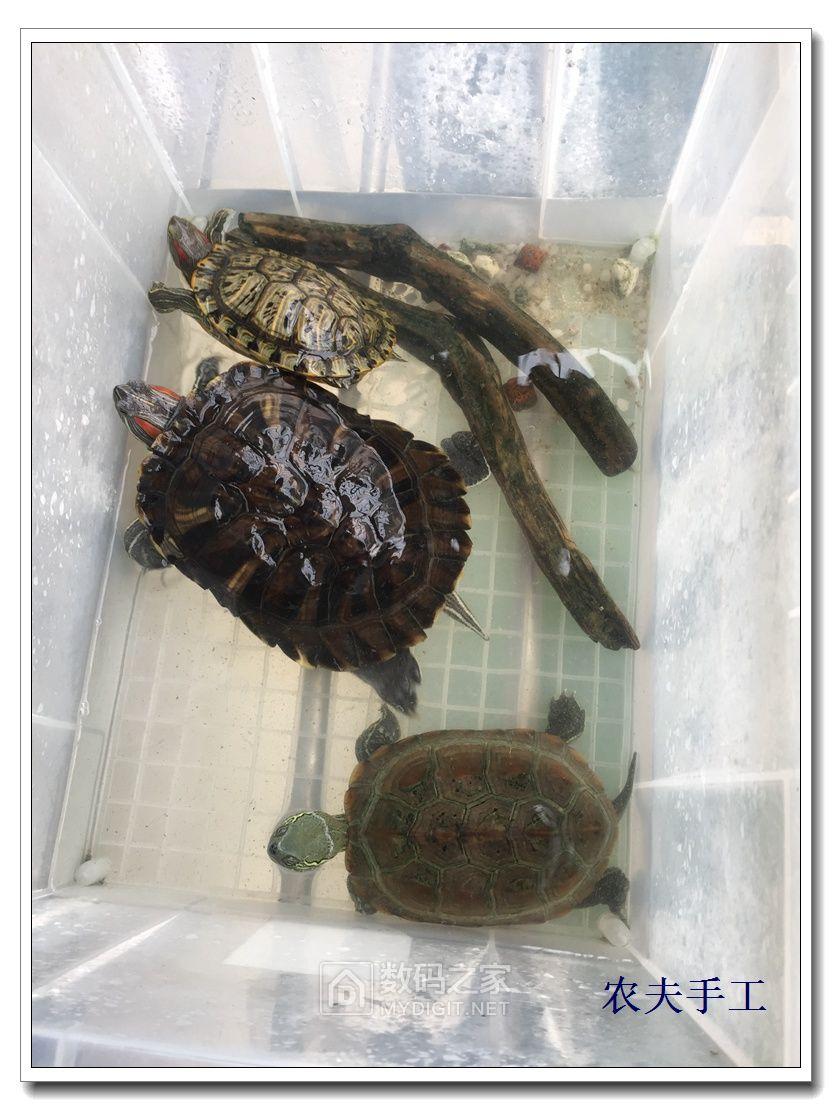 夏天骑车虽然热,可是风景好啊,还捡了一只大乌龟。