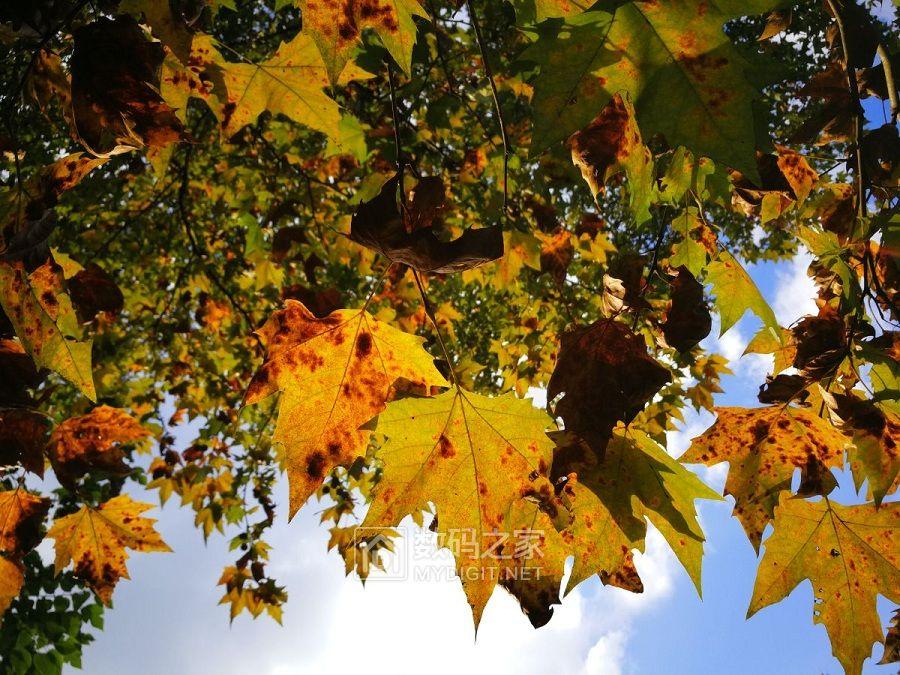秋天最遥远的距离