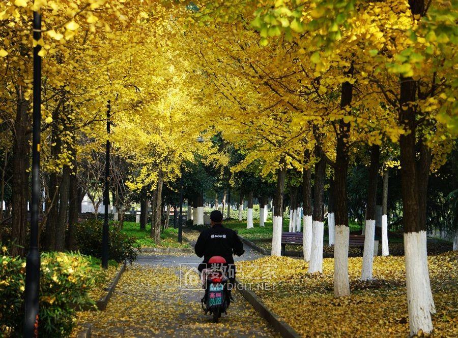 骑行黄金大道
