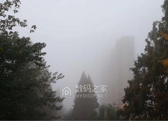 秋日雾,雾中景