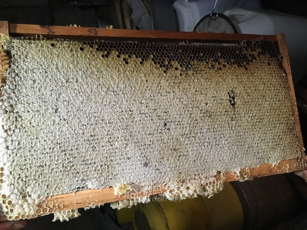 蜂农自产百花蜜,纯正,天然!