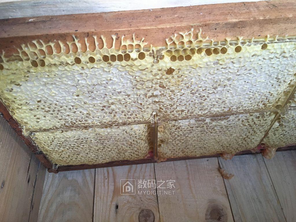椴蜜、巢蜜、百花蜜、蜂王浆已上架,品质不用多说,欢迎品鉴!
